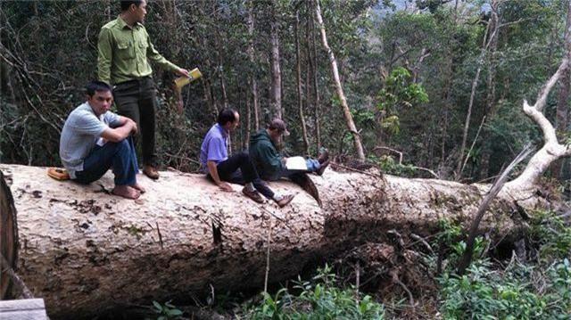 Bí thư tỉnh chỉ đạo xử lý vụ phát hiện thêm hàng chục m3 gỗ khai thác trái phép - 1