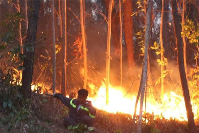 Hàng trăm người căng mình chữa cháy ở khu rừng cuồn cuộn lửa trong đêm - 2