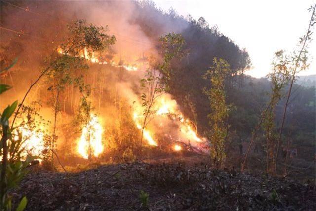 Hàng trăm người căng mình chữa cháy ở khu rừng cuồn cuộn lửa trong đêm - 6