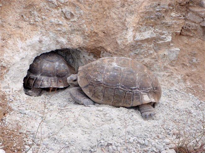 Những loài vật có tiếng thợ xây, chuyên làm nhà cho loài khác ở cùng - Ảnh 2.