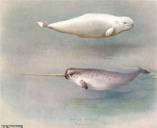 Quái vật biển kỳ dị là con lai của 2 loài khác nhau - Ảnh 6.