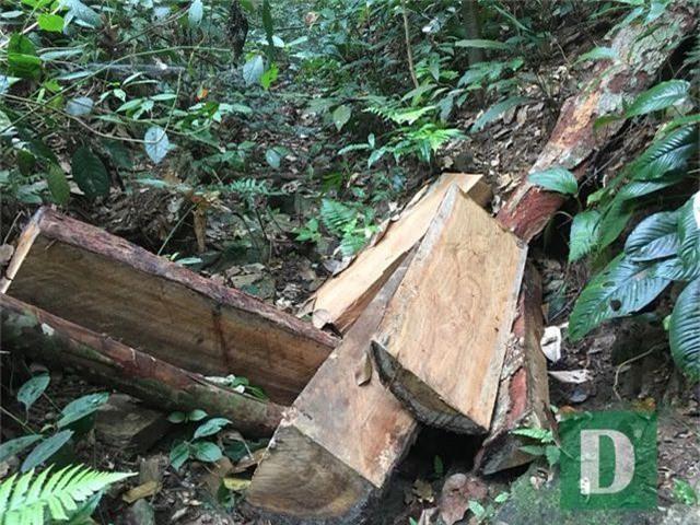 Vụ phá rừng gỗ quý tại rừng di sản: Kết luận bất ngờ của UBKT Tỉnh ủy Quảng Bình - 3
