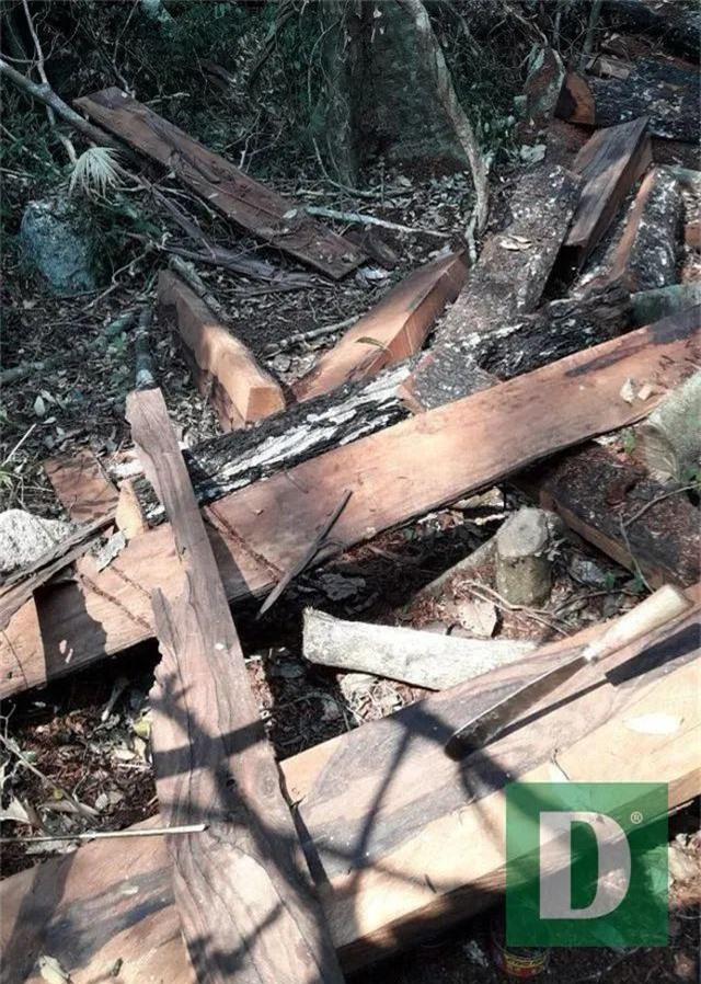 Vụ phá rừng gỗ quý tại rừng di sản: Kết luận bất ngờ của UBKT Tỉnh ủy Quảng Bình - 4