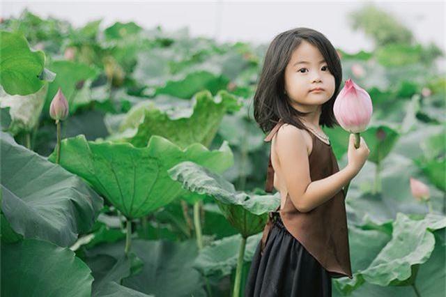 Bé gái Bắc Ninh xinh như thiên thần bên hoa sen - 5