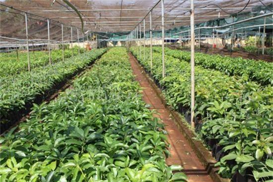 Trong các giải pháp phát triển nông nghiệp, giống vô cùng quan trọng. Việc ứng dụng những tiến bộ khoa học, năng lực chọn tạo giống đã được nâng lên một bậc rõ nét. (Ảnh TL)