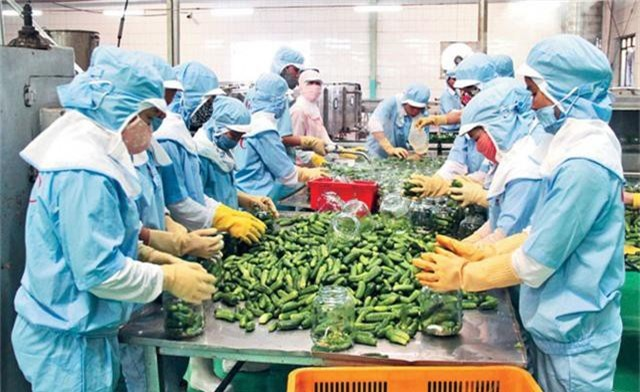 Chủ động khơi thông thị trường xuất khẩu nông sản - Ảnh 1