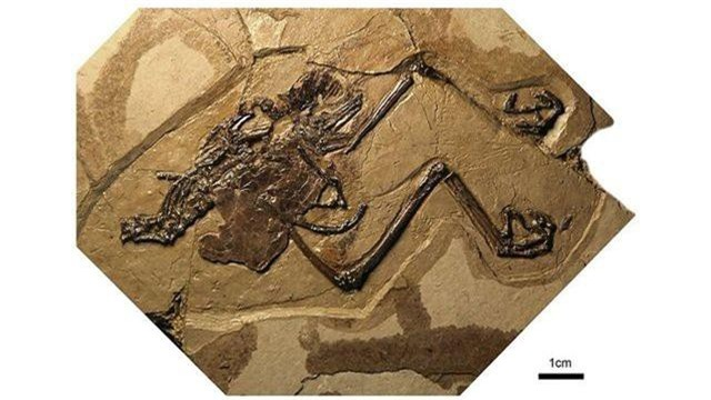 Các nhà khoa học phát hiện ra con chim hóa thạch đầu tiên với quả trứng còn nguyên vẹn - 1