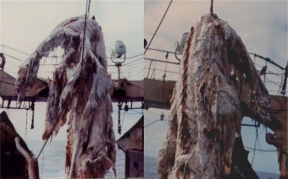 Xác con thủy quái khổng lồ bị vứt trả lại biển