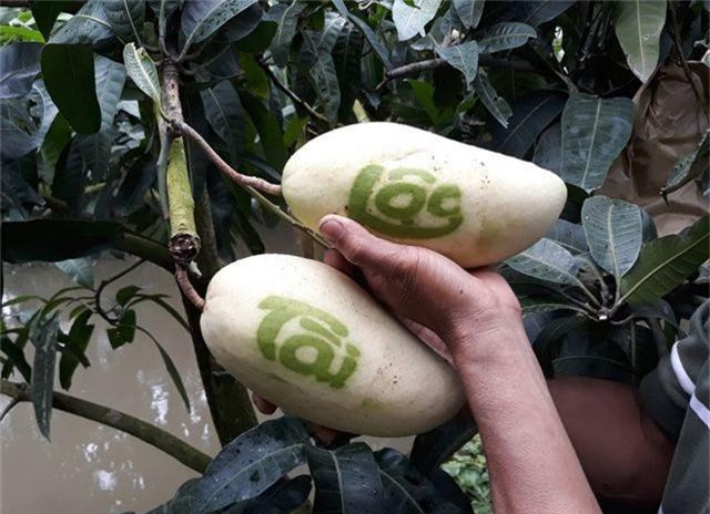 """Những loại quả có hình dáng """"kỳ quặc"""" nhất thế giới, Việt Nam cũng góp mặt - 9"""