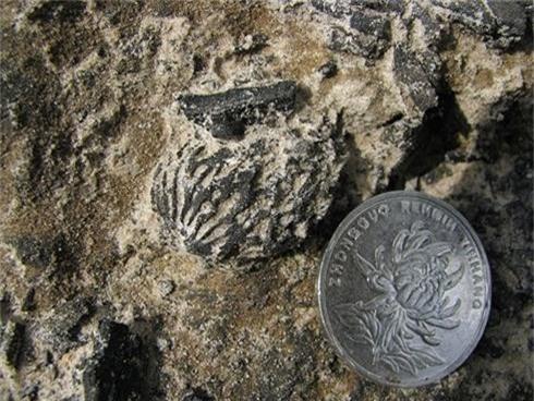 Phát hiện hóa thạch hột đào 2,5 triệu năm ở Trung Quốc - ảnh 1