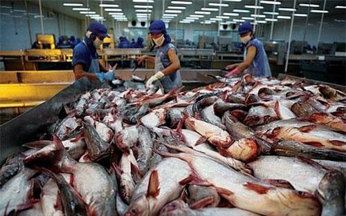 Xuất khẩu cá tra sang EU được kỳ vọng sẽ tăng trưởng nhờ EVFTA