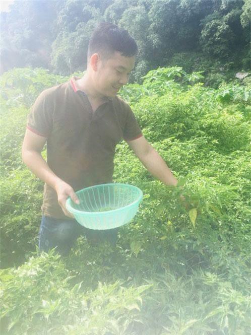 Ớt núi Phú Lương là một loại cây dễ trồng, cách chăm sóc cũng đơn giản.