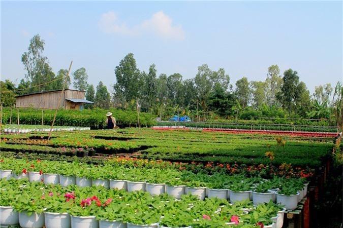 10 làng quê Việt Nam đẹp như miền cổ tích - 10