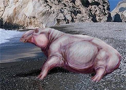 Tìm thấy hóa thạch hà mã cổ đại được mệnh danh