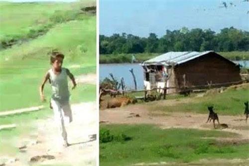 2 chú chó dũng cảm tấn công hổ để giúp những đứa trẻ chạy trốn.