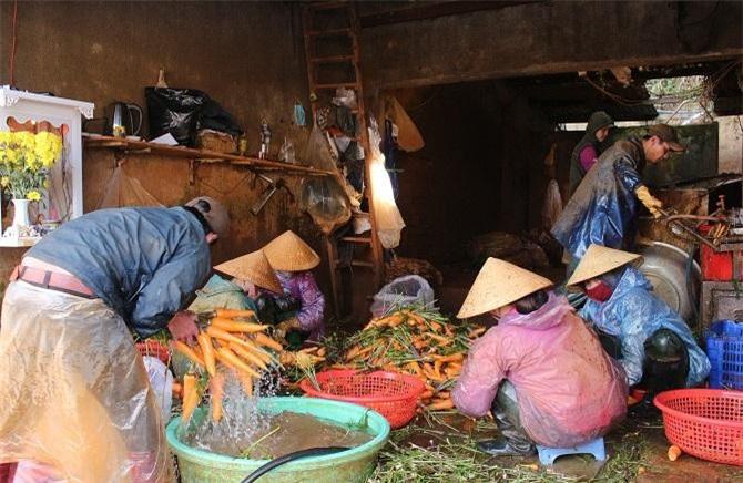 Phát triển chuỗi liên kết sản xuất, chế biến và tiêu thụ nông sản Đà Lạt - Lâm Đồng là điều kiện sống còn của người nông dân (Ảnh: VH)