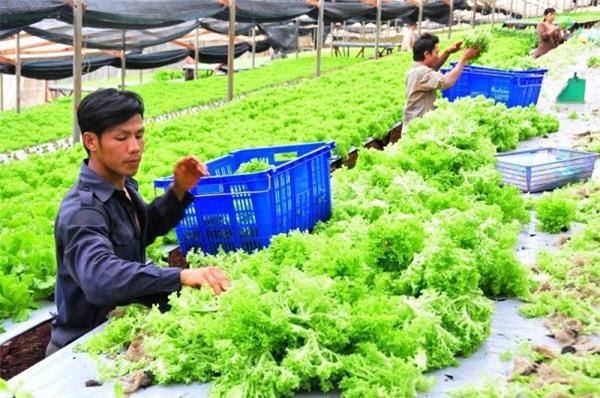 Tp. Hồ Chí Minh thu hút doanh nghiệp đầu tư vào nông nghiệp công nghệ cao.