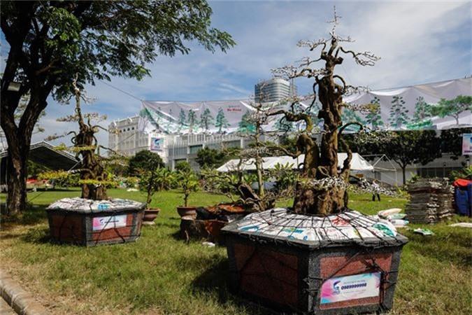 Choang vang khe bonsai tien ty uon luon hon ca duong cong Ngoc Trinh-Hinh-5