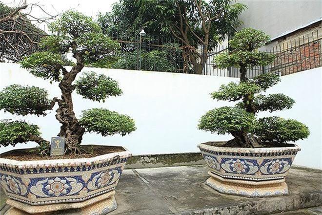 Choang vang khe bonsai tien ty uon luon hon ca duong cong Ngoc Trinh-Hinh-8