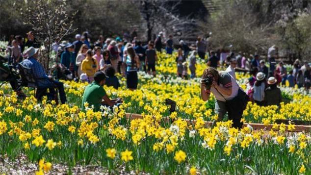 Du khách kéo đến cánh đồng hoa oải hương để chụp ảnh