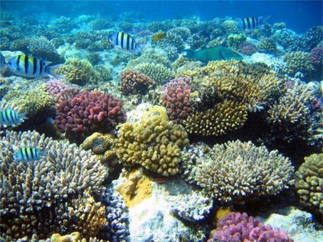 5 điểm ngắm san hô đẹp nhất Việt Nam, nhất định phải khám phá một lần trong đời - 4
