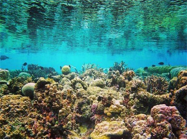 5 điểm ngắm san hô đẹp nhất Việt Nam, nhất định phải khám phá một lần trong đời - 8