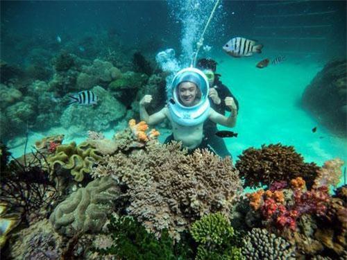 Ở biển Phú Quốc, du khách chỉ cần mặc áo phao và mang kính lặn có ống thông khí rồi úp mặt xuống nước là có thể chiêm ngưỡng san hô