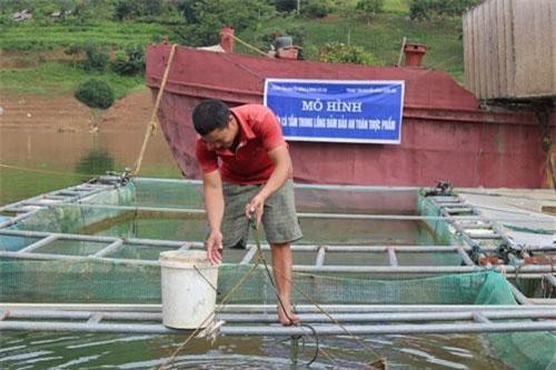 Anh Cao Văn Quyền chia sẻ cách chăm sóc, cho cá ăn.