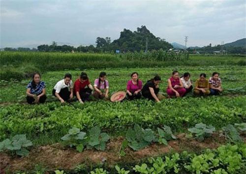 Bỏ thói quen gần 25 năm để học làm rau lại từ đầu theo hướng an toàn đã mang lại nguồn thu khá cho người dân.