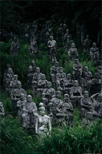 """Canh tuong giat minh o """"rung tuong ma"""" khet tieng Nhat Ban-Hinh-5"""