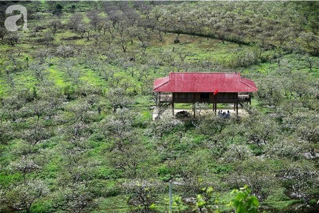 Thung lũng mận Nà Ka (Mộc Châu, Sơn La) nổi danh với rừng hoa mận đẹp mê hồn.