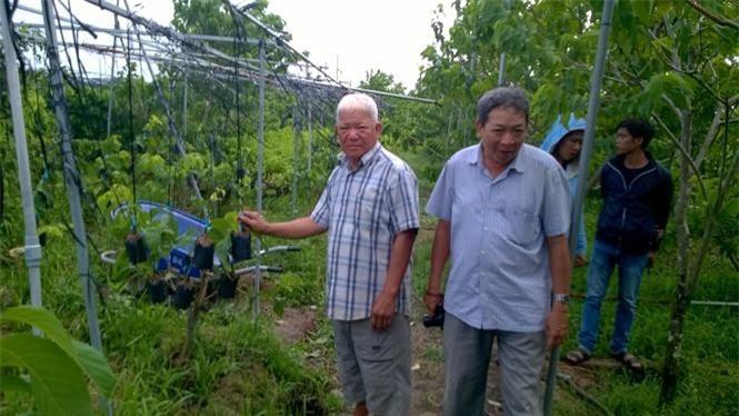Ông Nguyễn Văn Năm (trái) giới thiệu những cây na Thái đang ghép.