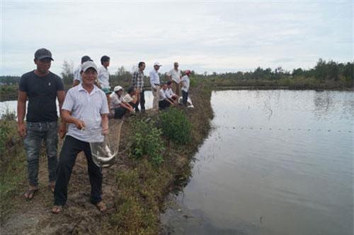 Tham quan mô hình nuôi cá đối ở xã Bình Châu.