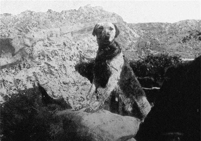 Ba cuoc chien tranh ngo ngan nhat trong lich su nhan loai-Hinh-11
