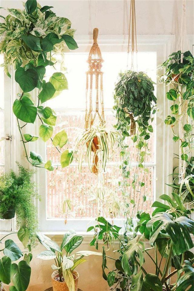 Thiết kế nhà trồng cây - nghe thì to tát nhưng thực ra dù nhà to hay nhỏ bạn đều có thể làm được - Ảnh 6.