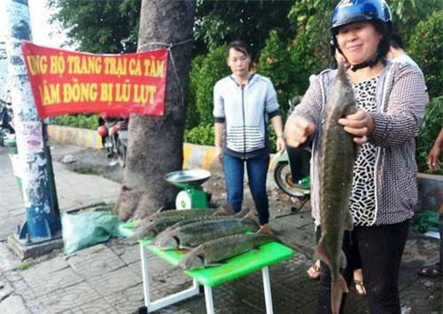 """Nhiều điểm bán cá tầm dã chiến đã được """"mọc"""" lên ở TPHCM."""