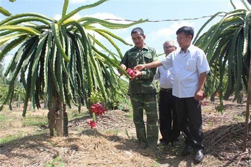 Ông Nguyễn Văn Chung (trái) đang hướng dẫn cách chăm sóc thanh long ruột đỏ cho khách tham quan.
