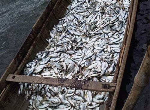 Anh Huân bắt được gần 400 kg cá, bán được hơn 2 triệu đồng.