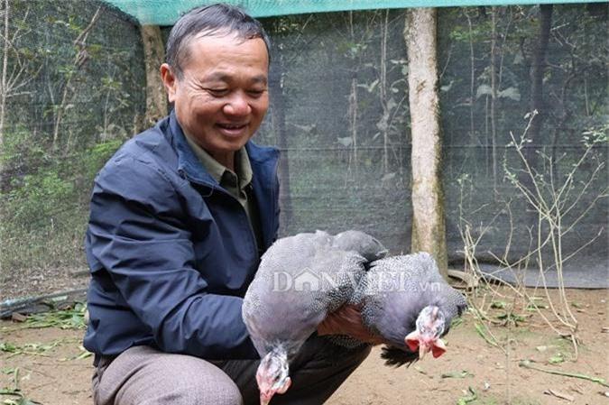 Từ nuôi gà sao, cuộc sống của ông Đón ngày càng khá giả. Ảnh: Dân Việt.