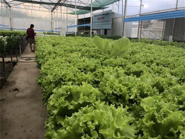 Sau mưa lũ, các loại rau xanh Đà Lạt đồng loạt tăng giá - 3