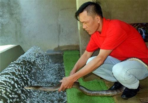 Anh Trung giới thiệu quy trình nuôi rắn.