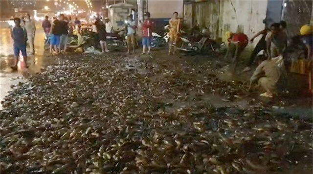 Hơn 100 người giúp tài xế gom 2,7 tấn cá bị đổ tràn trên quốc lộ - 2