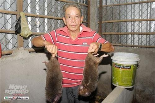 Ông Hiếu chia sẻ, trong một chuyến ra Hà Nôi năm 2006, ông thấy thịt dúi ăn ngon và có giá trị kinh tế cao nên không ngần ngại bỏ gần 15 triệu đồng mua 12 con về nuôi thử (trong đó 8 cái và 4 con đực).