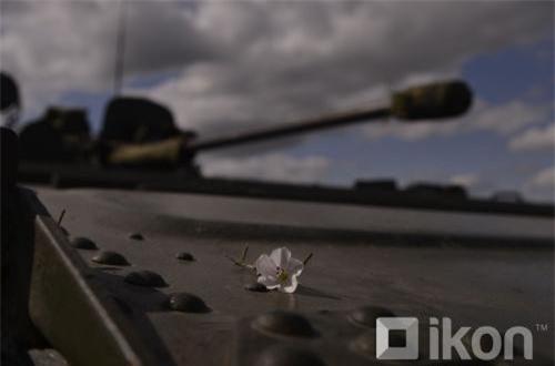 Một bông hoa nằm trên mặt trước xe chiến đấu bộ binh BMP-2. Ảnh: Oikon