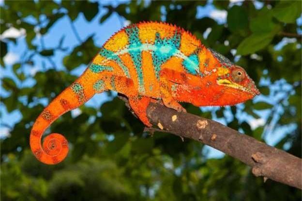 Nhung loai dong vat ky la hiem co o Madagascar