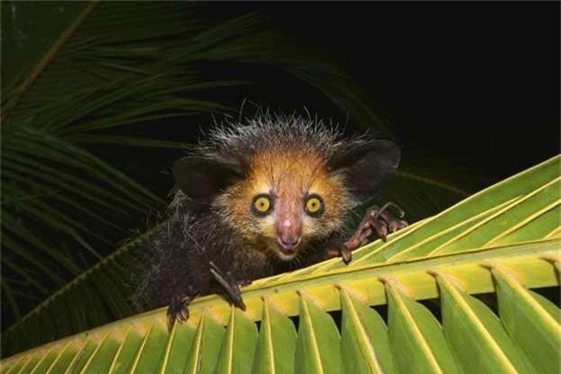Nhung loai dong vat ky la hiem co o Madagascar-Hinh-10