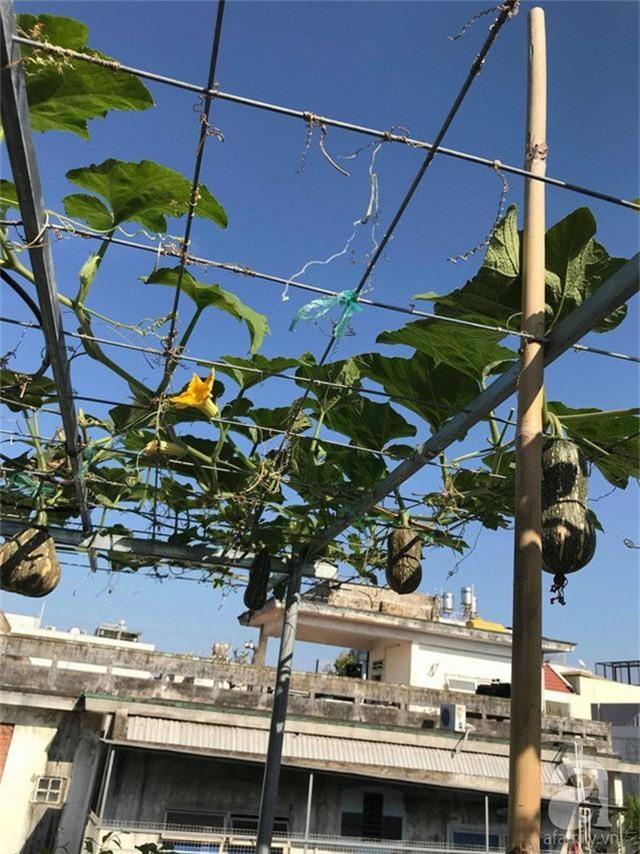 Kinh nghiệm trồng táo trên sân thượng thu hoạch không xuể của người đàn ông đảm đang ở Sài Gòn - Ảnh 16.