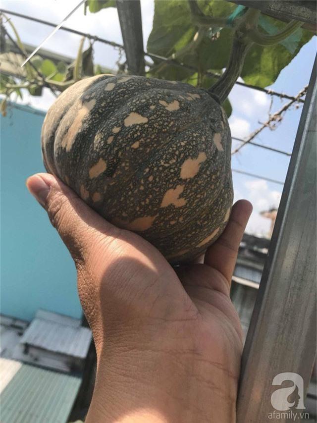 Kinh nghiệm trồng táo trên sân thượng thu hoạch không xuể của người đàn ông đảm đang ở Sài Gòn - Ảnh 18.