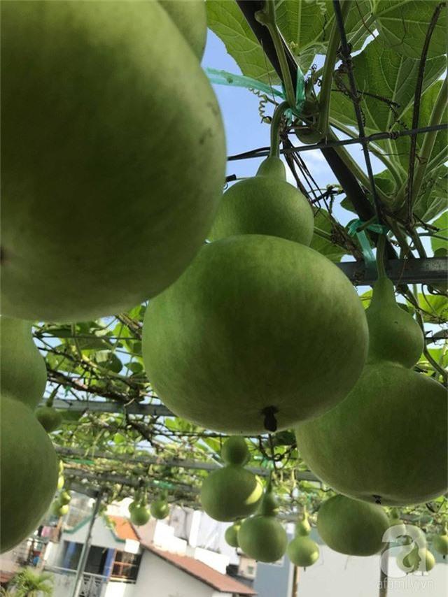 Kinh nghiệm trồng táo trên sân thượng thu hoạch không xuể của người đàn ông đảm đang ở Sài Gòn - Ảnh 19.