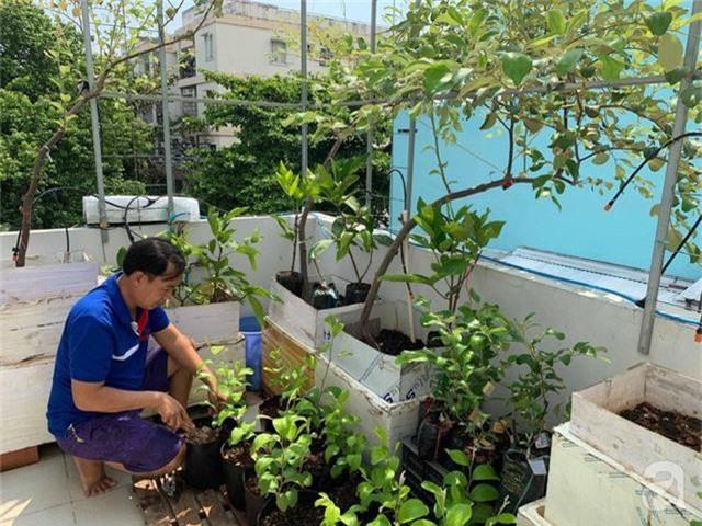 Kinh nghiệm trồng táo trên sân thượng thu hoạch không xuể của người đàn ông đảm đang ở Sài Gòn - Ảnh 2.